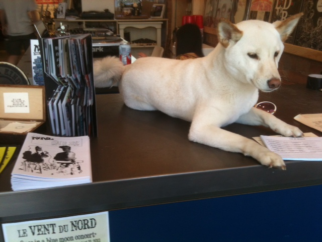 static zine dog of a kind nxne jessica lewis